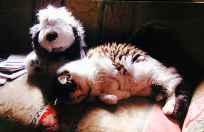 A picture of Phyllis Diller's cat, snuggling with the plush Farley doll that was a gift from Lynn.