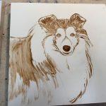 Pet portrait of Keira, the sheltie, in progress