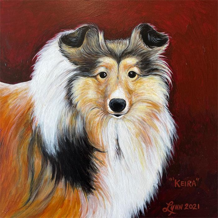 Pet portrait of Keira, the sheltie