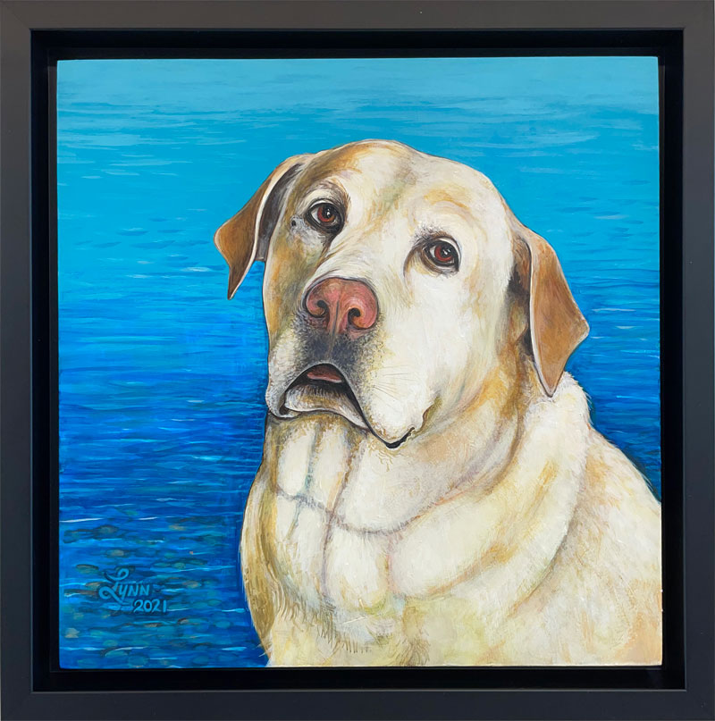Portrait of Odin the yellow lab
